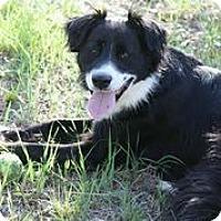 Adopt A Pet :: Gunner - Austin, TX