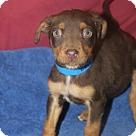 Adopt A Pet :: Conner