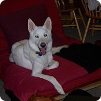 Adopt A Pet :: Buck (Guest) - Roswell, GA