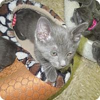 Adopt A Pet :: Clover - Medina, OH