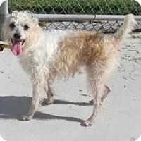 Adopt A Pet :: Zowee - Elmwood Park, NJ
