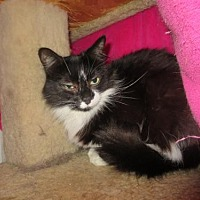 Adopt A Pet :: Nelly - Coos Bay, OR