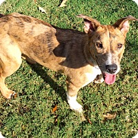 Adopt A Pet :: LOLA - CHICAGO, IL