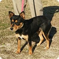 Adopt A Pet :: Trina - Rockville, MD