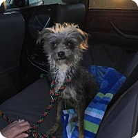 Adopt A Pet :: Daphne - Pearland, TX