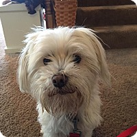 Adopt A Pet :: Mayson - Dayton, OH