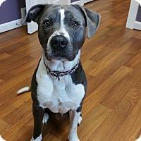 Adopt A Pet :: Jack-A-Moe - Lisbon, OH