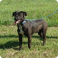 Adopt A Pet :: jemma - Cameron, MO