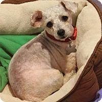 Adopt A Pet :: Rio - Kennesaw, GA