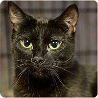 Adopt A Pet :: Maxine - Milford, MA