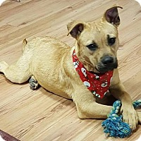 Adopt A Pet :: Trixie - Allentown, NJ