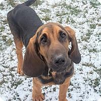 Adopt A Pet :: Elvis - Lafayette, NJ