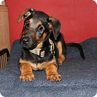 Adopt A Pet :: PG Tips - Los Angeles, CA