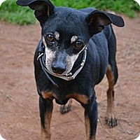 Adopt A Pet :: Taz - Athens, GA