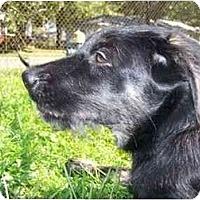 Adopt A Pet :: Towser - Wellington, OH