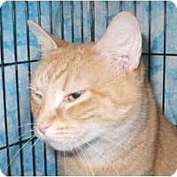 Adopt A Pet :: Amelia - Colmar, PA