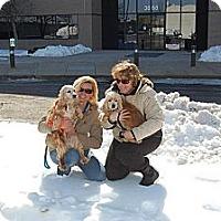 Adopt A Pet :: Darcy - Menomonee Falls, WI