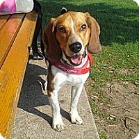 Adopt A Pet :: Houston - Hamilton, ON