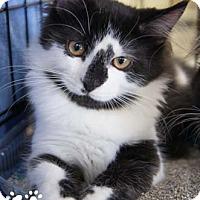 Adopt A Pet :: Janus - Merrifield, VA