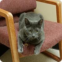 Adopt A Pet :: WALKER - Tiffin, OH