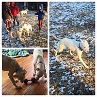 Adopt A Pet :: Hokey - Dayton, OH
