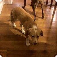 Adopt A Pet :: Sage - Ogden, UT