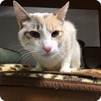 Adopt A Pet :: Lola - Diamond Springs, CA