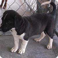 Adopt A Pet :: Boots - Bonifay, FL
