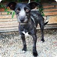 Adopt A Pet :: Pepsi - Santa Cruz, CA