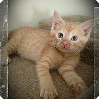 Adopt A Pet :: Payten (adoption pending) - Richmond, VA