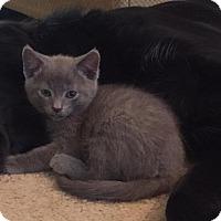 Adopt A Pet :: Franc - Gainesville, FL