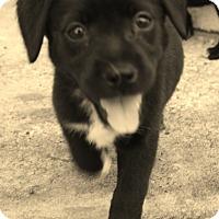 Adopt A Pet :: Scotty - Weeki Wachee, FL