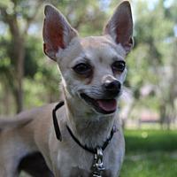 Adopt A Pet :: Goldie - Salina, UT