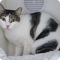 Adopt A Pet :: Shy Girl - Merrifield, VA