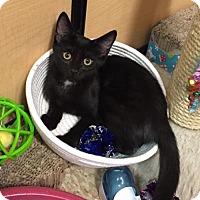 Adopt A Pet :: Abner - Independence, MO