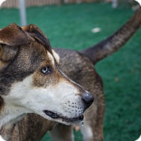 Adopt A Pet :: Zule - Chula Vista, CA