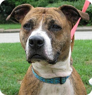 Terrier (Unknown Type, Medium) Mix Dog for adoption in New Kensington, Pennsylvania - Sasha