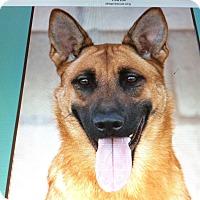 Adopt A Pet :: JENNY VON GENF - Los Angeles, CA