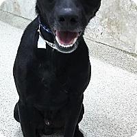 Adopt A Pet :: Brett - Plainfield, IL