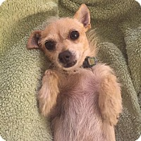 Adopt A Pet :: Levi - tampa, FL