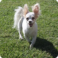 Adopt A Pet :: Dante - Henderson, NV