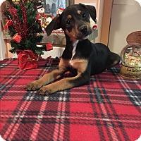 Adopt A Pet :: Hera - Kittery, ME