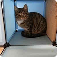 Adopt A Pet :: Hope - Saginaw, MI