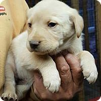 Adopt A Pet :: Baby Girl Boo Too - Baileyton, AL