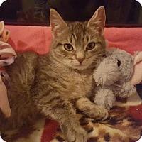 Adopt A Pet :: Miranda - Pendleton, NY