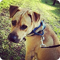 Adopt A Pet :: ludo - hollywood, FL