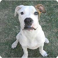 Adopt A Pet :: Eddy - Mesa, AZ