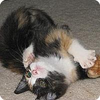 Adopt A Pet :: Ellie - Monroe, NC