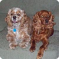 Adopt A Pet :: Sebastian & Grumpy, A Pair - Toluca Lake, CA