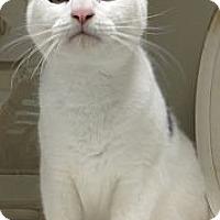 Adopt A Pet :: Charlie - Miami, FL